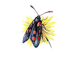 blut der insekten